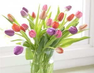 Tulips-OrgStyle-FL08_lg-300x234